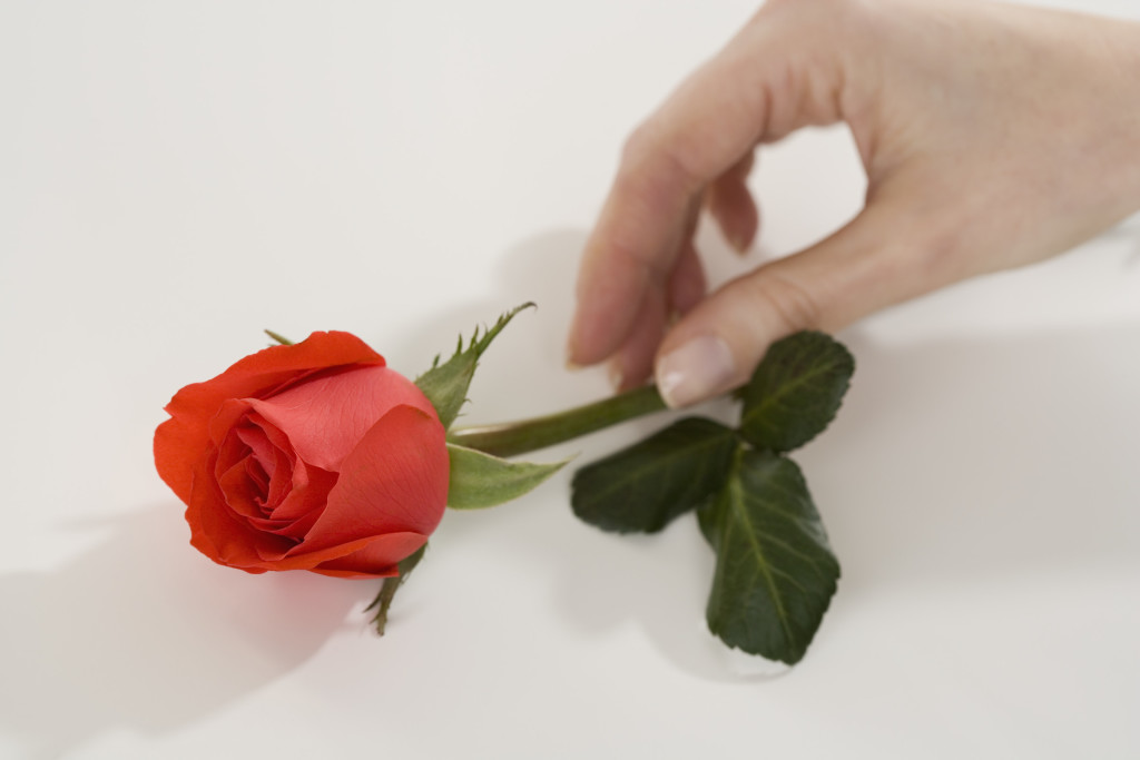 Hand Reaching for Red Rose