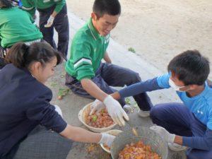 銀杏の実を手作業でより分ける東輝中の生徒たち。