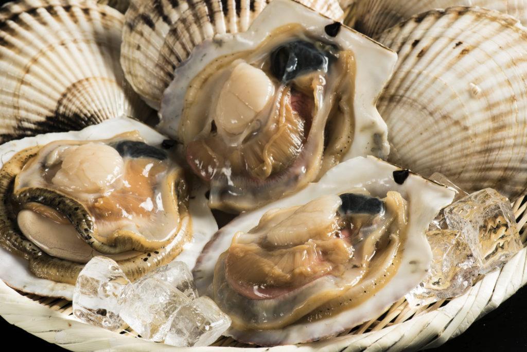 枝幸沖の砂地で育ったホタテの貝殻は薄く繊細