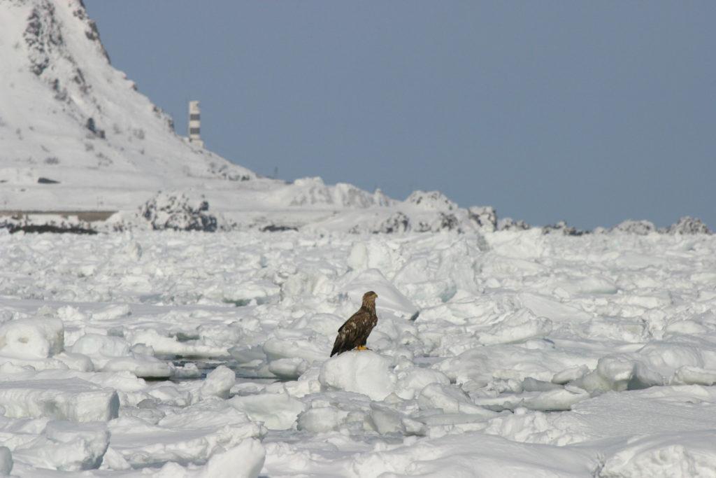 流氷が接岸する枝幸の海