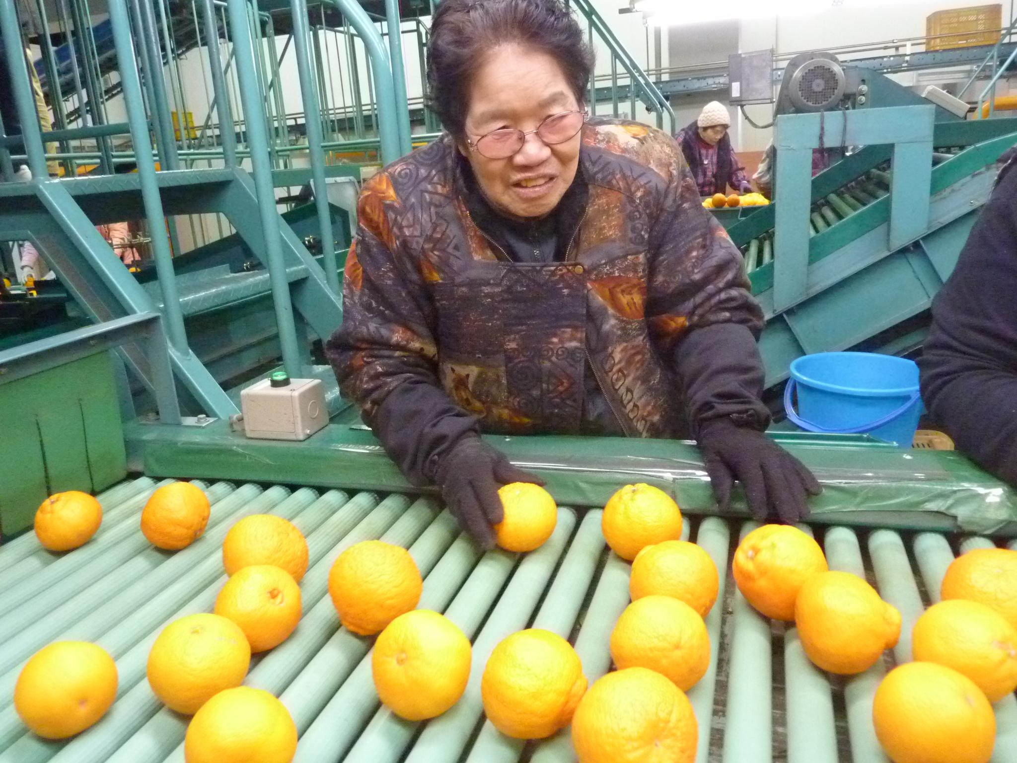 この道60年の清家シズエさんは「この仕事は誰にも負けない」。