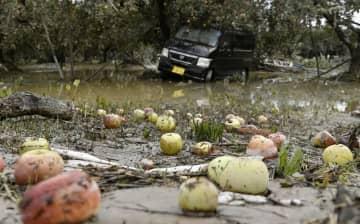 19年農業被害、4600億円 豪雨頻発、被害甚大に 画像1