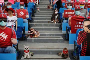 台湾プロ野球、雨天で開幕お預け 無観客試合を予定 画像1