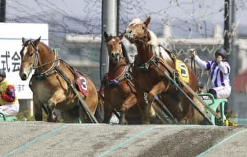 若馬が未来の名馬目指し力走 北海道、ばんえい競馬 画像1