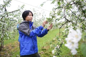 盛岡のリンゴ園、コロナ失業支援 SNSでスタッフ募集 画像1