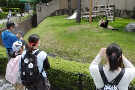 営業を再開した「アドベンチャーワールド」でジャイアントパンダを見る人たち=21日午前、和歌山県白浜町