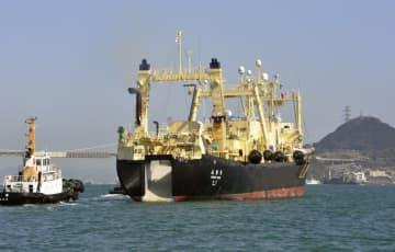 国際捕鯨委総会を1年延期 コロナ影響、日本脱退後初 画像1