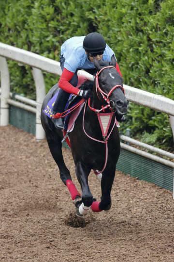 競馬、コントレイル動き絶好 ダービーの最終追い切り 画像1