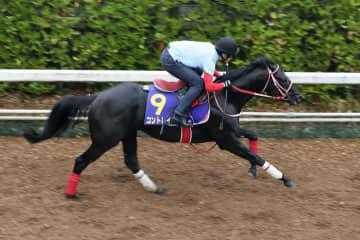 競馬、コントレイル(3)枠5番 日本ダービー枠順 画像1