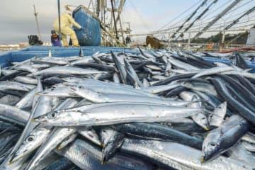 2019年漁獲量は過去最低 サンマやサケが記録的不漁 画像1