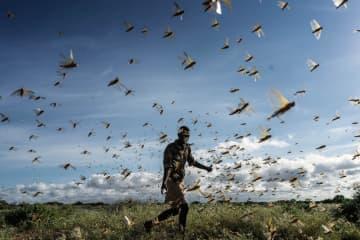 バッタ襲来、食糧危機懸念 国連警鐘、温暖化影響も 画像1