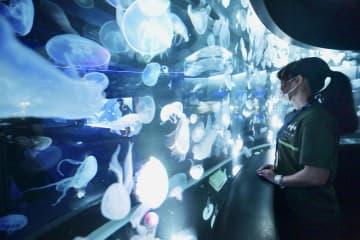 京都水族館、クラゲ5千匹を展示 西日本最多、20種以上 画像1