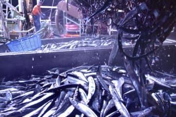 サンマ漁獲量、昨年の3割 全国8~9月、過去最低を更新 画像1