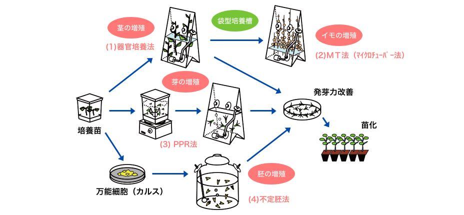 キリンが独自に開発したのが4つの大量増殖技術
