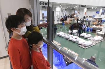 東京・豊洲マグロ競り、見学再開 コロナで中止、8カ月ぶり 画像1