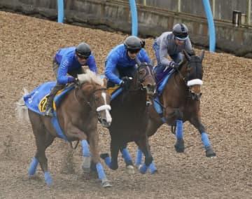 三冠馬3頭は仕上がり順調 競馬のジャパンC追い切り 画像1