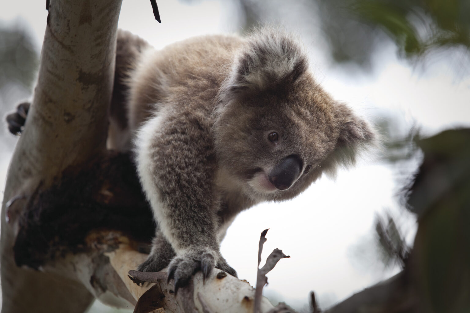 Images from Phillip Island Nature Parks  |  2016