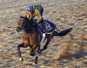 大一番へ各馬の態勢整う 競馬の有馬記念追い切り 画像1