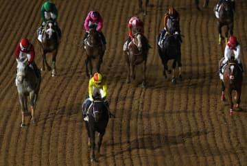 競馬、コパノキッキングなど優勝 サウジ国際競走、日本馬5頭出走 画像1