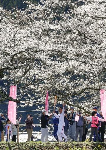 栃木2日目、聖火が桜並木を通過 前回東京大会のランナーも 画像1