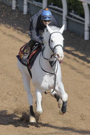 白毛のソダシ、好仕上がり 競馬の桜花賞追い切り 画像1