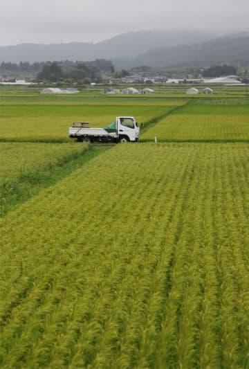 38都道府県がコメ生産減少 コロナで需要落ち込み 画像1