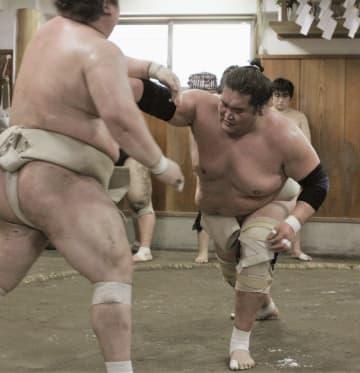 照ノ富士、相撲取る稽古再開 綱とりへ「冷静に準備」 画像1