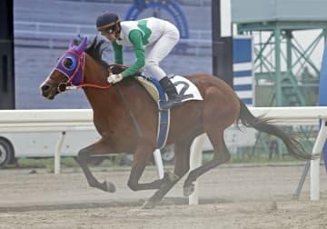 7歳遅咲きも競走馬合格、北海道 トウカイテイオー産駒 画像1