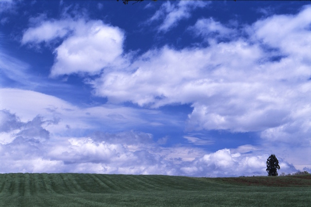 関東地方在住者お気に入りの「ご当地言葉」と「ご当地グルメ」【ちょっと面白い都道府県ランキング】 画像4
