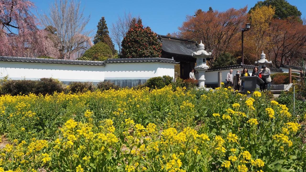 【山梨県】自然のパワーに癒やされたい!富士山の絶景、農場体験、温泉、桜や紅葉、ご当地グルメを満喫 画像4