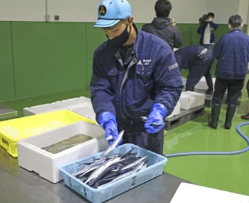 サンマようやく初水揚げ、北海道 1キロ2万円超え 画像1