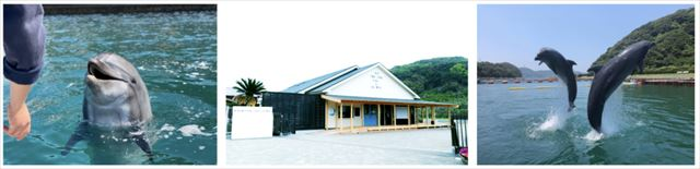 【1組限定グランピング】神々の島・壱岐島でイルカに癒されるリトリートプラン 画像3