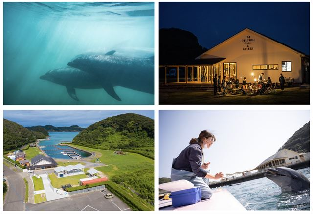 【1組限定グランピング】神々の島・壱岐島でイルカに癒されるリトリートプラン 画像4