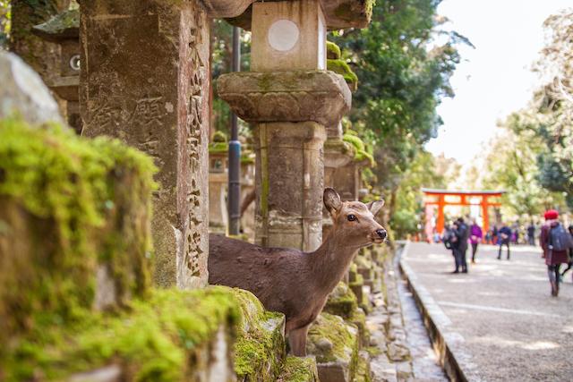 関西地方在住者お気に入りの「ご当地言葉」と「ご当地グルメ」【ちょっと面白い都道府県ランキング】 画像11