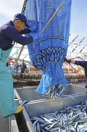 サンマ漁、大型船初水揚げも低調 日本一の北海道根室市 画像1