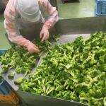 これまで流通プロセスで廃棄されていたブロッコリーの茎を活用  Upcycle by Oisix、7月発売から2トンの食品ロス削減を達成
