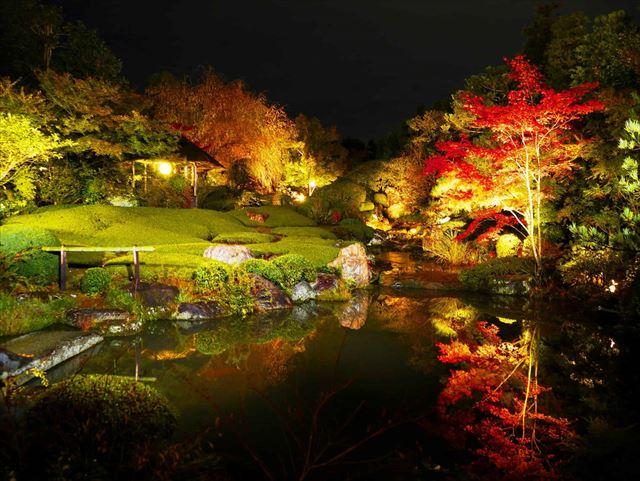 【星のや京都】夜の妙心寺退蔵院を貸切!「月夜の薄紅葉(うすもみじ)狩り」 画像2