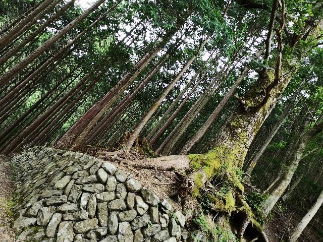 神秘の空間「鍾乳洞」をはしご!洞川の大自然に触れるアクティビティ【奈良・天川村】 画像14