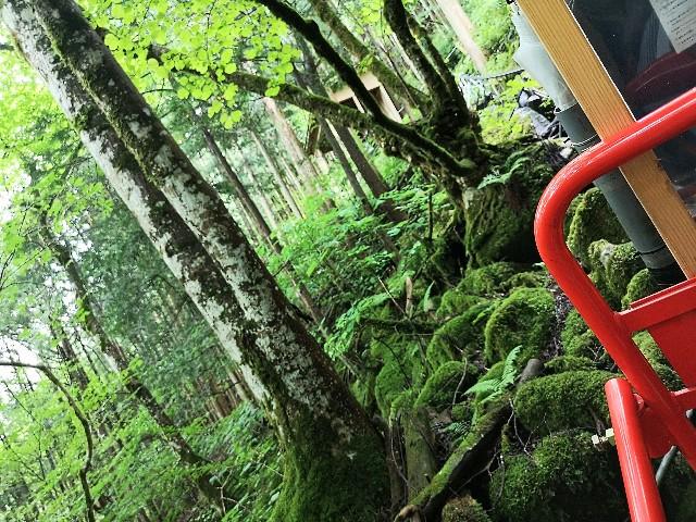 神秘の空間「鍾乳洞」をはしご!洞川の大自然に触れるアクティビティ【奈良・天川村】 画像23