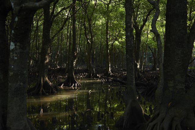 【星野リゾート 西表島ホテル】世界自然遺産登録!豊かな自然と魅力に触れる旅 画像3
