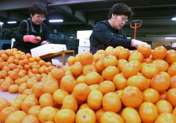 温州ミカン、ベトナム輸出解禁 検疫条件で合意、10月1日から 画像1