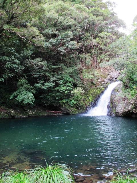 【世界遺産】「奄美大島、徳之島、沖縄島北部および西表島」見どころ10選 画像2