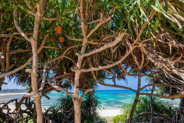 【世界遺産】「奄美大島、徳之島、沖縄島北部および西表島」見どころ10選 画像4