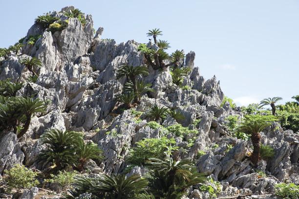 【世界遺産】「奄美大島、徳之島、沖縄島北部および西表島」見どころ10選 画像8