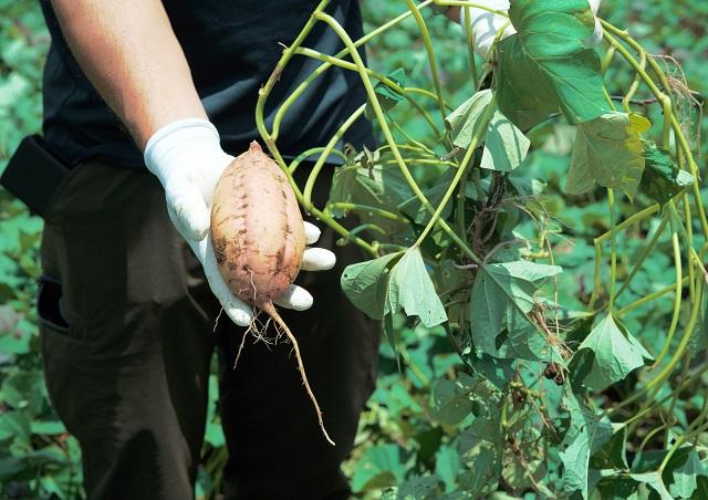 ねっとり甘くて風味豊かな秋の味覚!乃が美から「種子島産安納芋ジャム」発売 画像3
