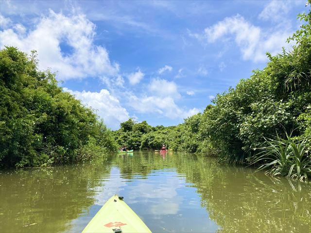 世界遺産に登録!沖縄北部・慶佐次湾のヒルギ林でマングローブカヌーを体験してみた 画像6