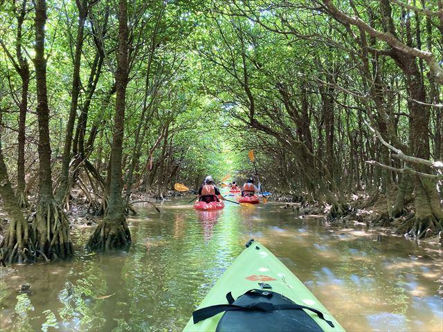 世界遺産に登録!沖縄北部・慶佐次湾のヒルギ林でマングローブカヌーを体験してみた 画像12