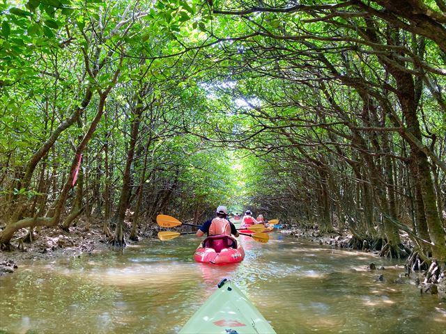 世界遺産に登録!沖縄北部・慶佐次湾のヒルギ林でマングローブカヌーを体験してみた 画像1