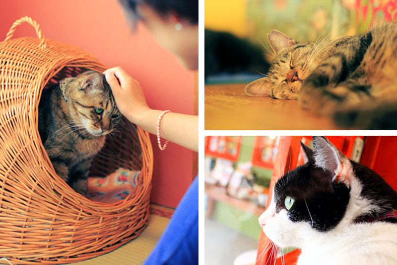 収益は保護猫の命を守るために