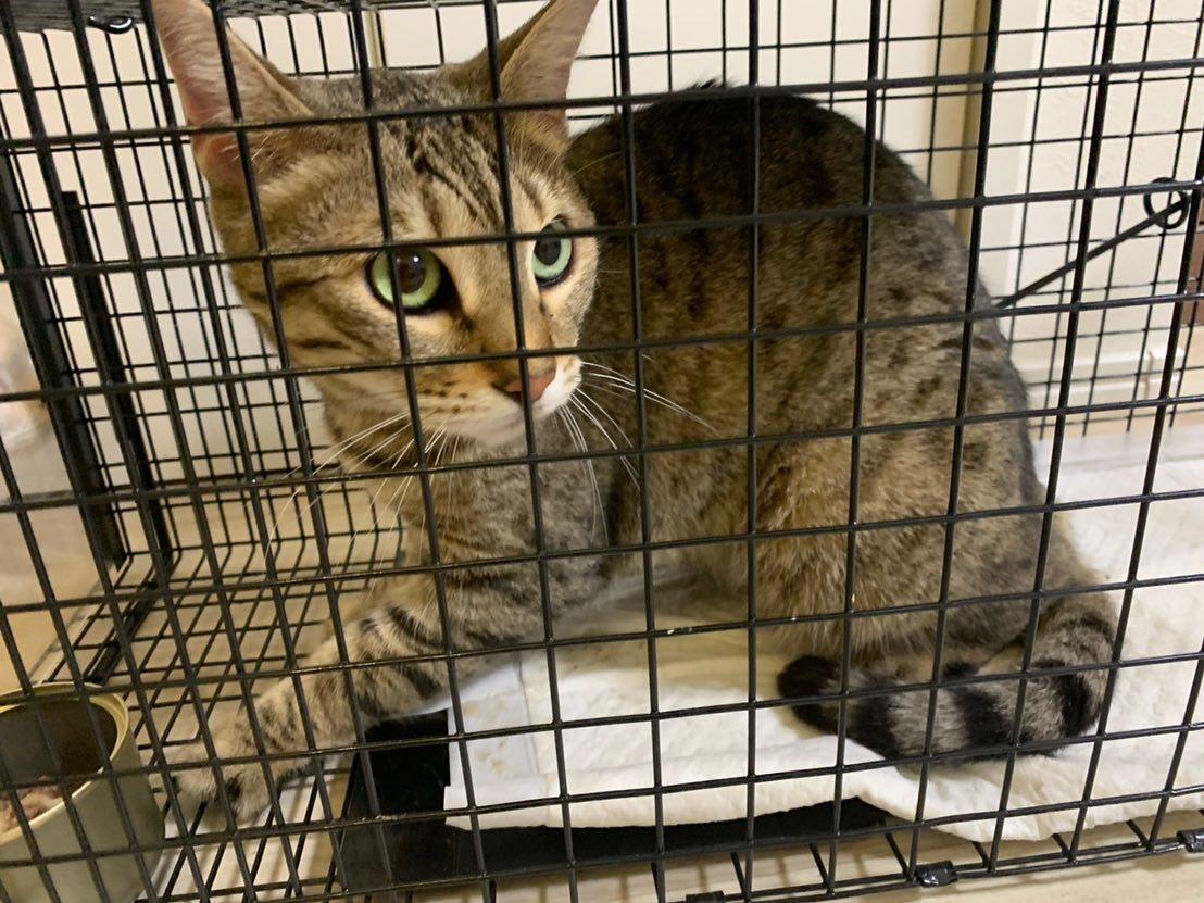無事捕獲された猫